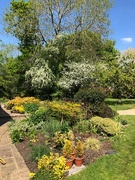 26th Apr 2020 - Garden