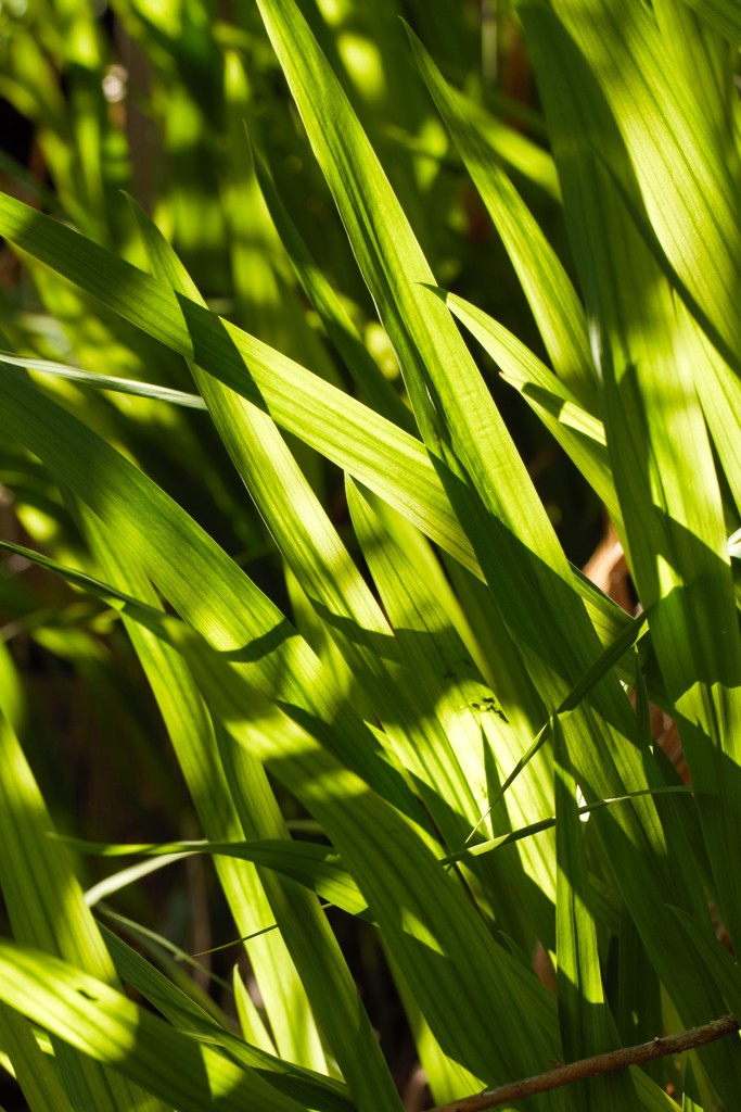 Geometric green by ruthmouch