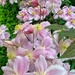 Pink flowers.  by cocobella