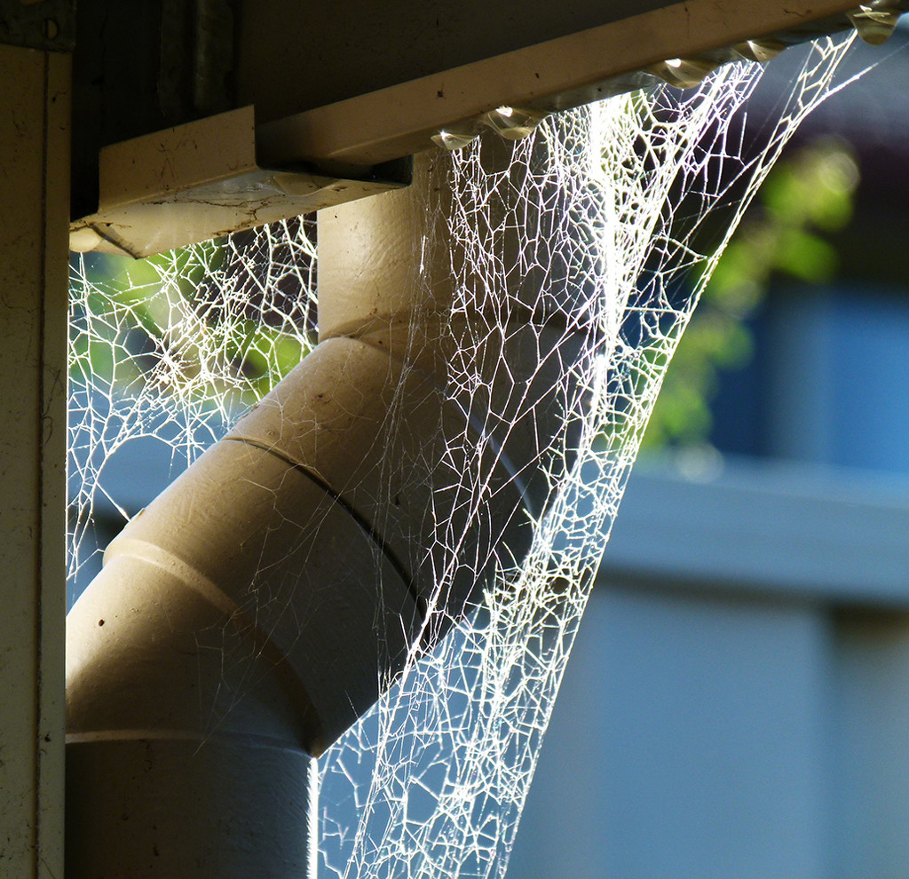 Sparkling Web by onewing