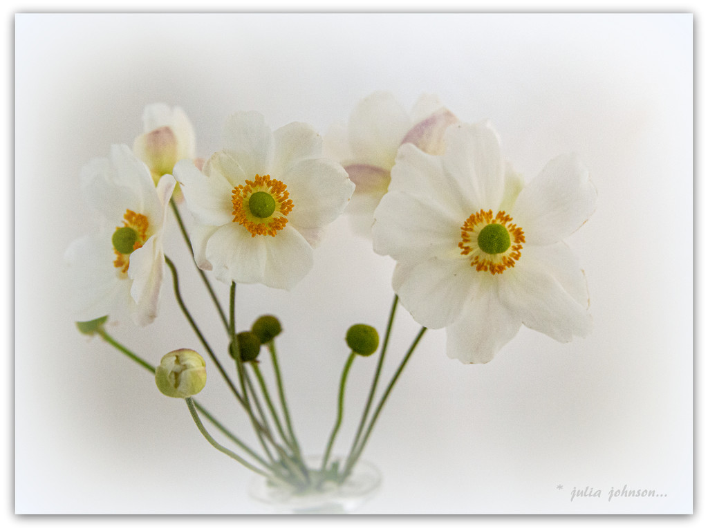 White on White... by julzmaioro