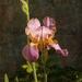 Garden Botanical by Weezilou