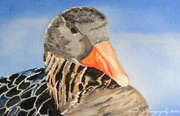 29th Apr 2020 - Female Goose (painting)