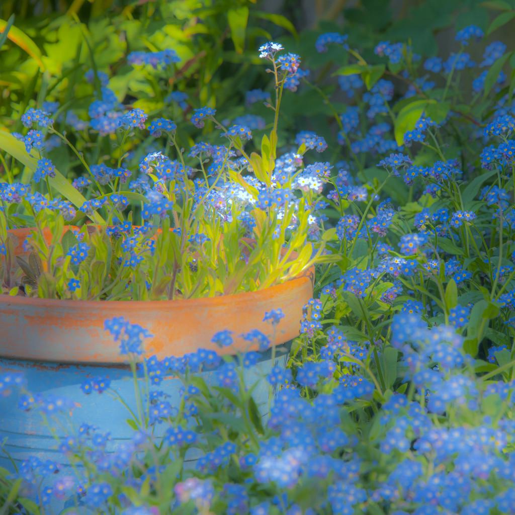 An English Cottage Garden by seanoneill