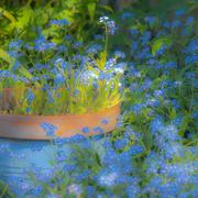 24th Apr 2020 - An English Cottage Garden