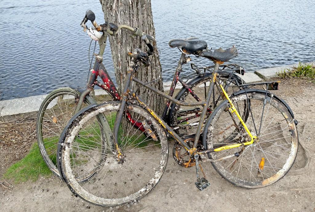 bikes by runner365