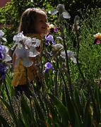 29th Apr 2020 - Irises