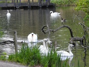 26th Apr 2020 - Life on the Pond