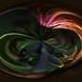 Rhody for Swirl  by jgpittenger