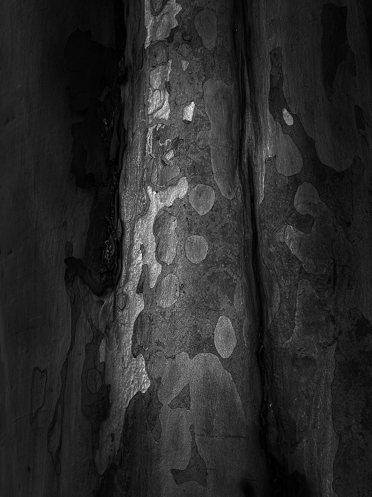 Bark Patterns by ethelperry