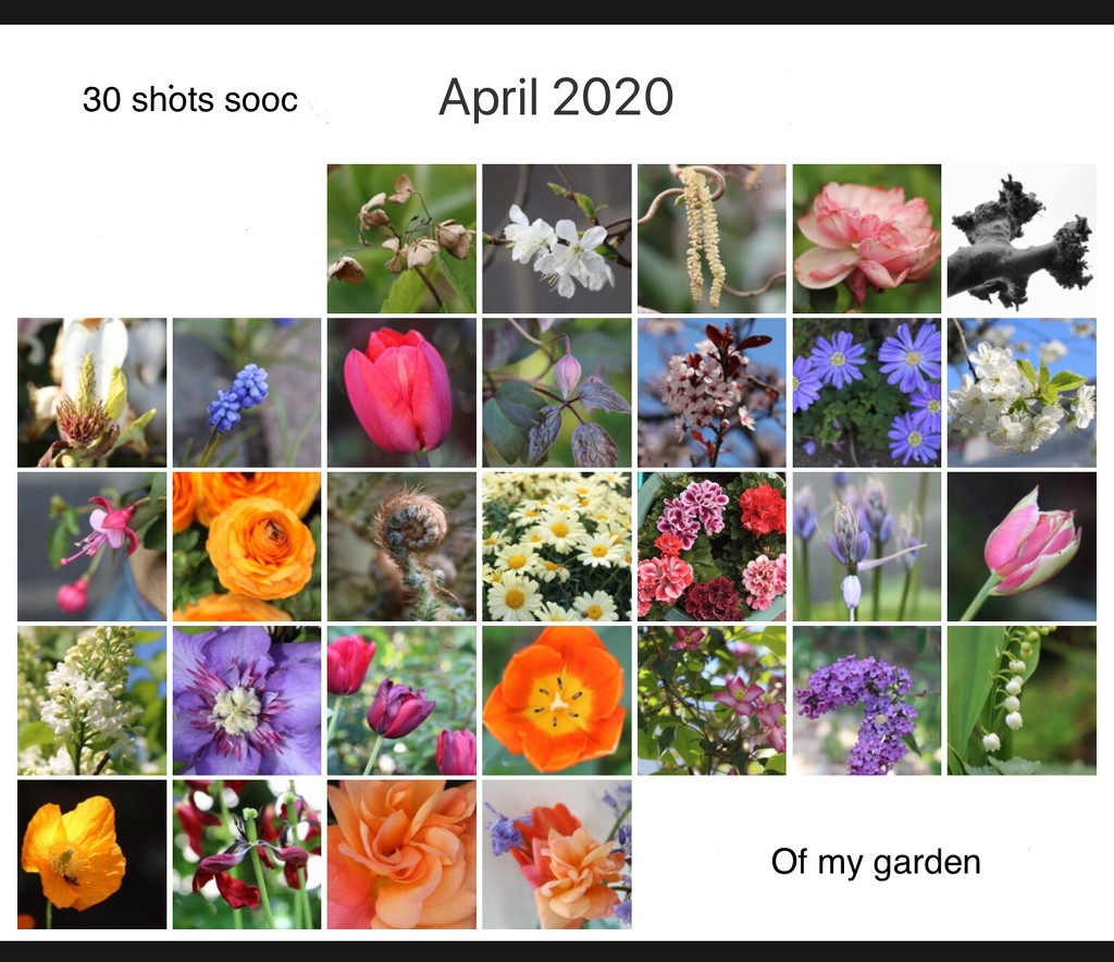 30 shots sooc of my garden  by momamo