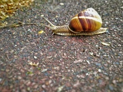30th Apr 2020 - Go go little snail!