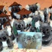 Koalas Ready For Their New Homes ~   by happysnaps