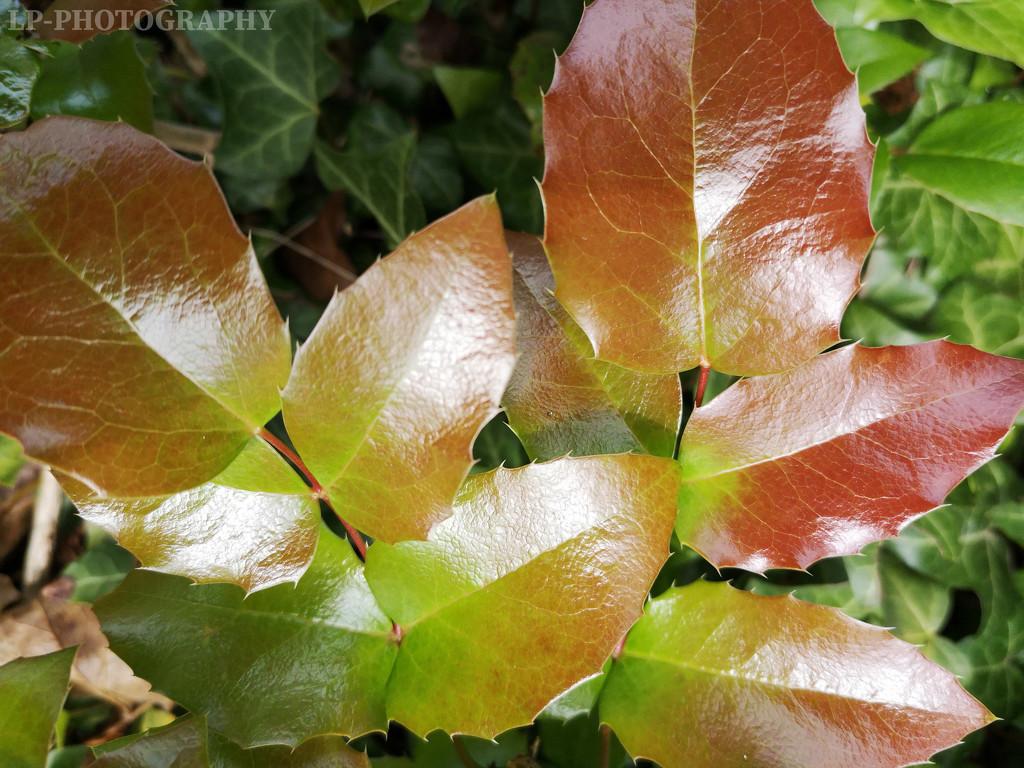 Metallic Leaves by tiredpanda
