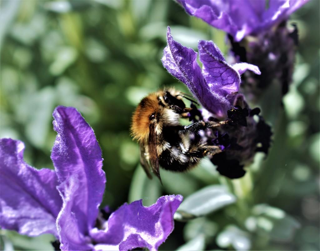 Bee I by madeinnl