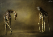 30th Apr 2020 - Giraffes for Textures