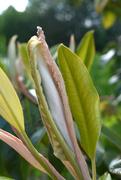 27th Apr 2020 - magnoliabokeh