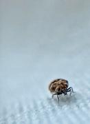 2nd May 2020 - Hello bug !