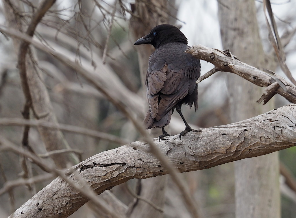 Bird on a Branch by redy4et