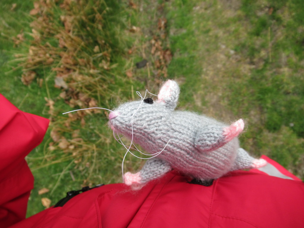 I found I've got a rat-holder on my coat by anniesue