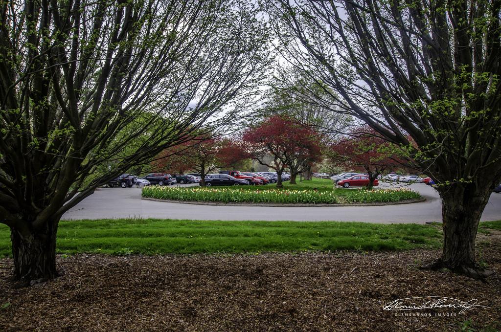 Spring's Fancy in the Parking Lot by ggshearron