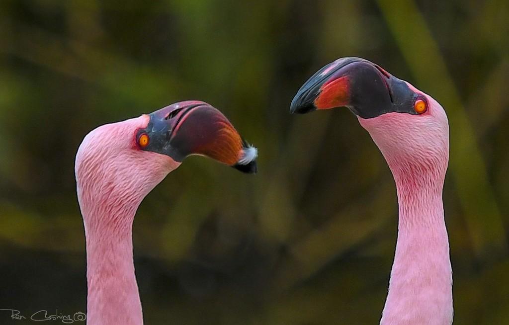 Flamingo Friday '20 10 by stray_shooter