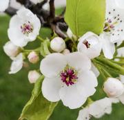 29th Apr 2020 - Spring Flowers 4-29