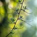 Natural patterns by haskar
