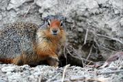 28th Apr 2020 - Red Squirrel