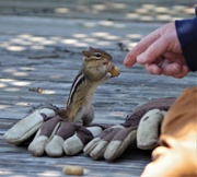 2nd May 2020 - My hubby and the chipmunk