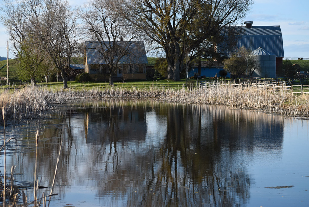 Pond Reflections by bjywamer