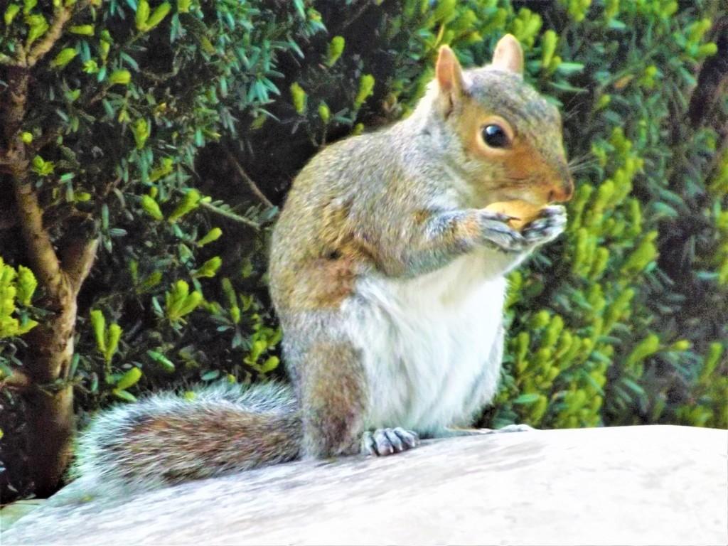 Nut Job by ajisaac
