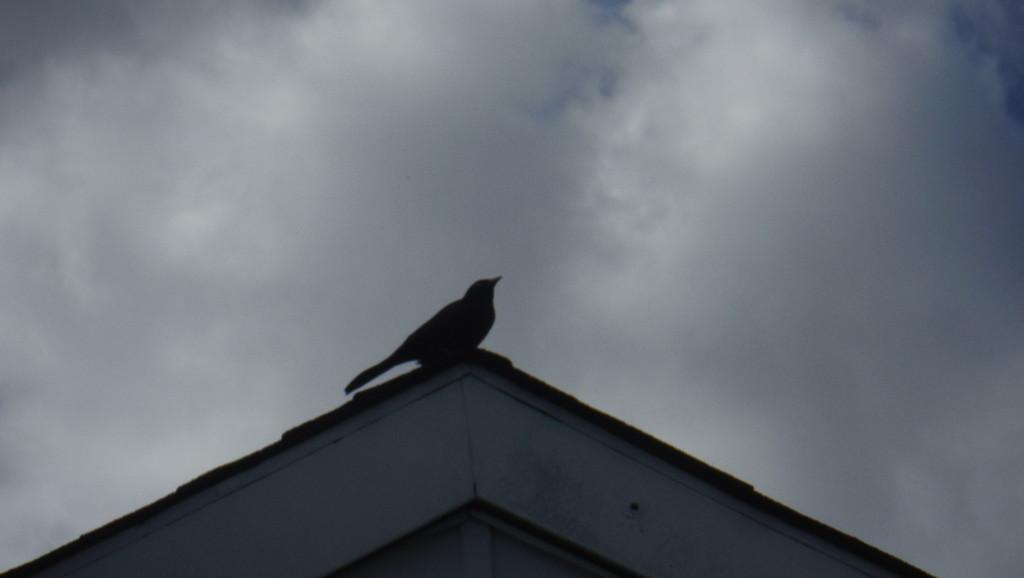 Bird on a Rooftop by spanishliz