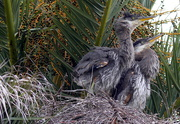 3rd May 2020 - Look Who's in the Nest