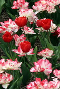 1st May 2020 - Colorful Flowers