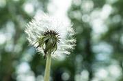 3rd May 2020 - Weed