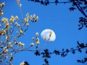 3rd May 2020 - A Day May Moon