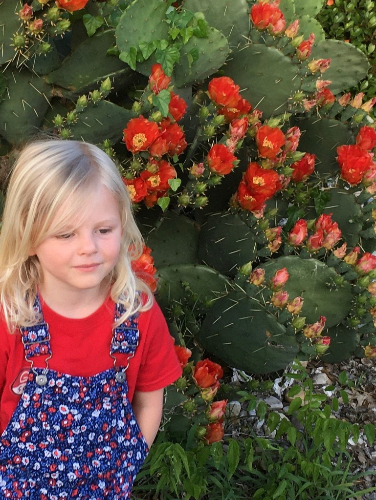 Felicity and the prickly pear by louannwarren