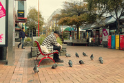 4th May 2020 - Pigeons Practise Social Distancing