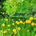Buttercups 'n' fence