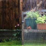 4th May 2020 - Scattered Shower