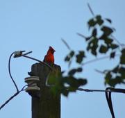 4th May 2020 - bird watching