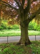 5th May 2020 - Happy tree