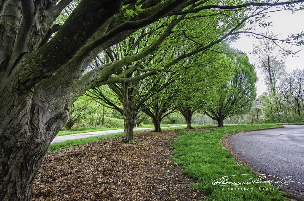 The Walk Away by ggshearron