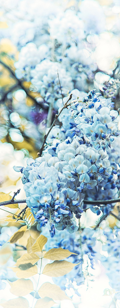 blue rain by jerome
