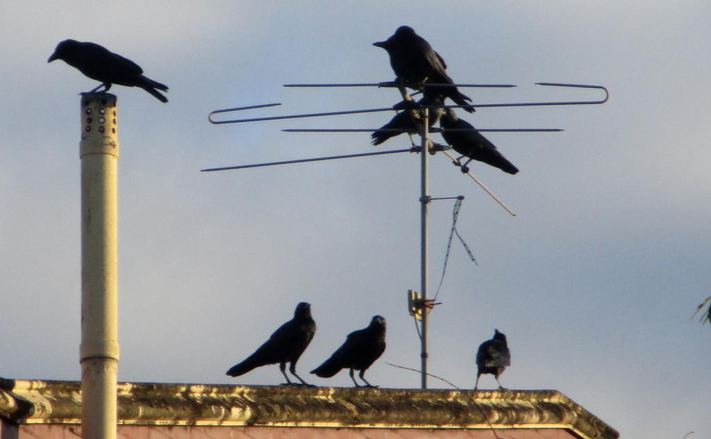 Blackbird meeting place by 777margo