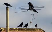 5th May 2020 - Blackbird meeting place