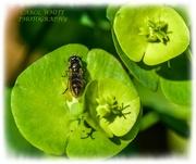 5th May 2020 - Bug And Euphorbia