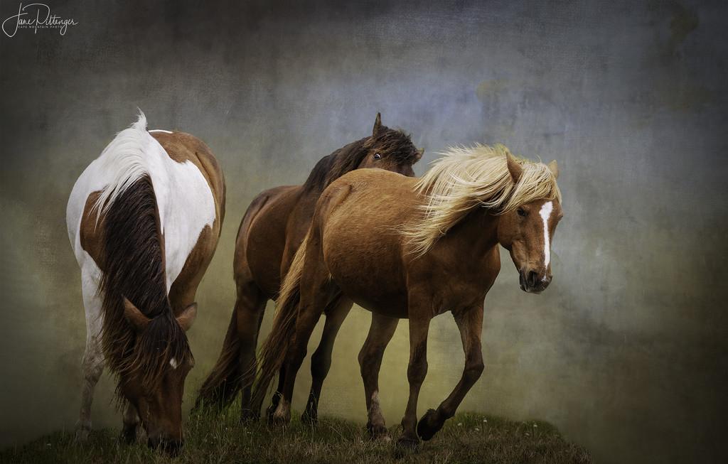Assateague Horses with Textures by jgpittenger