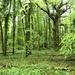 Green by julienne1
